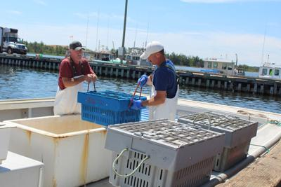 Challenging spring lobster season ends with an eye to the future