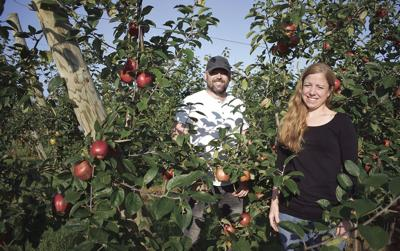 Red Point orchard