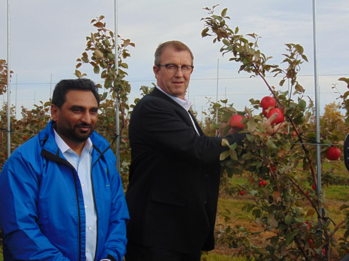 Agriculture And Fisheries Minister Alan McIsaac Right Picks The Ceremonial First Apple At Canadian Nectar Products To Signify Start Of