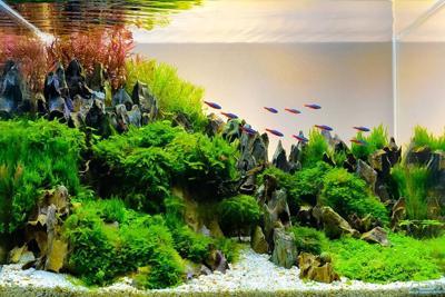 Image of landscape nature style aquarium tank aguascaping