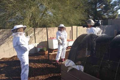 Tim Moore Beekeeping