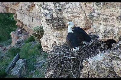 bald eagle Lake Pleasant camera