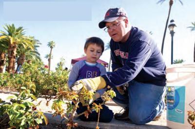 Rose Garden Healing Veterans