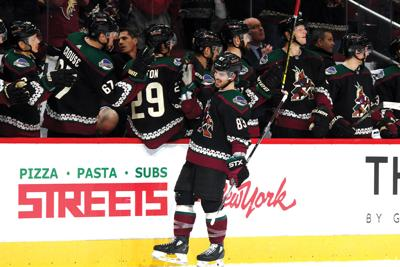 The Coyotes