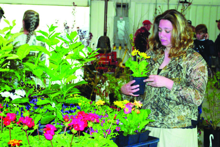 Home And Garden Show, Picking Plants