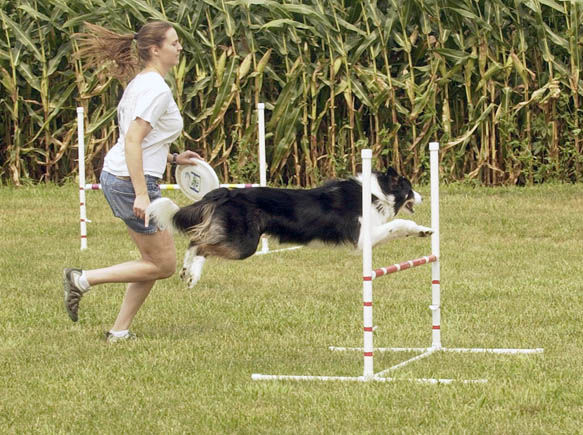 Walton organization rescues Midwest Border collies | Archives
