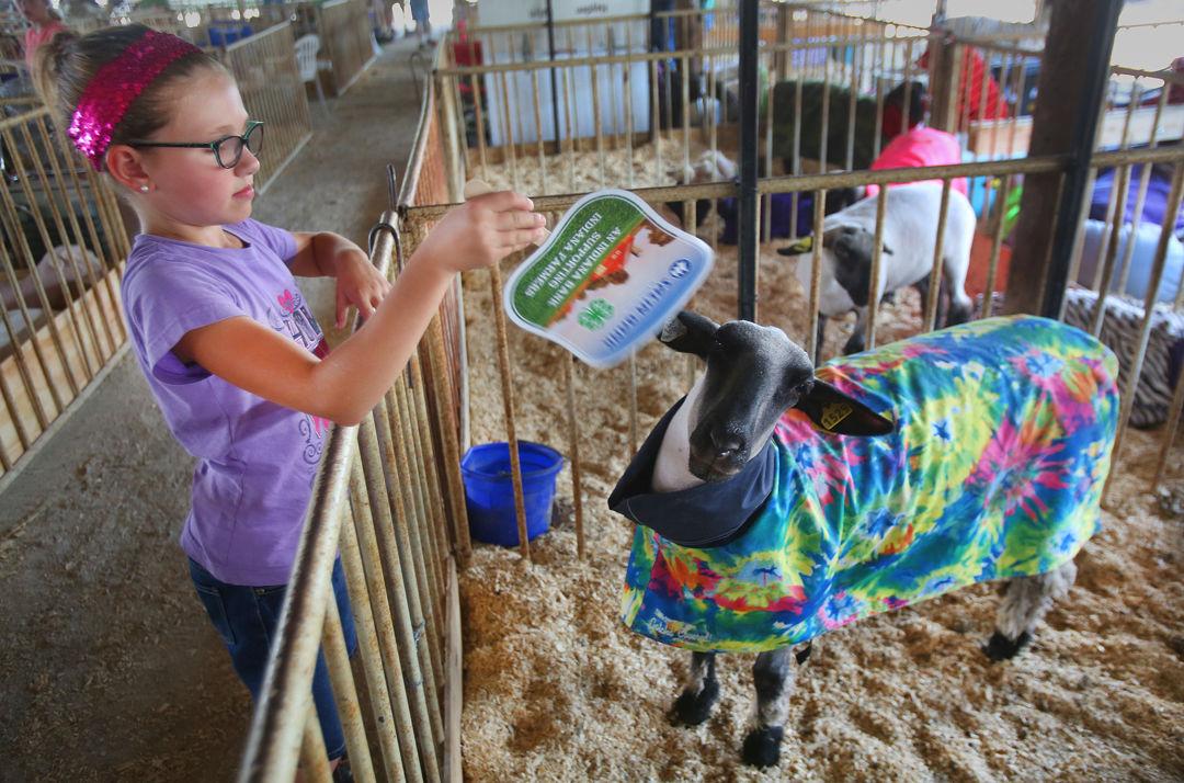 Cass County 4-H Fair Day Two | News | pharostribune com
