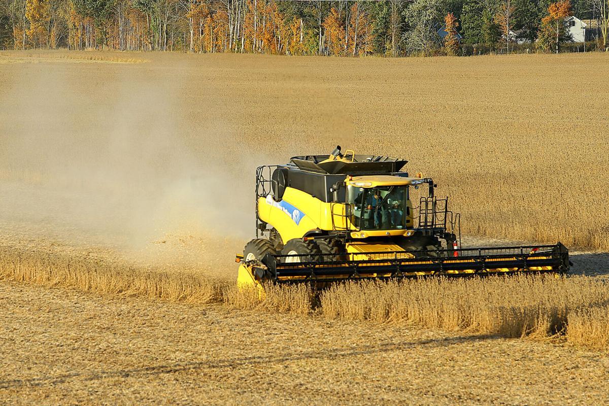 Harvesting Soybeans 02.jpg