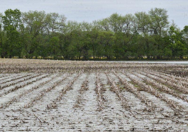 Area farmers mull whether to plant this year