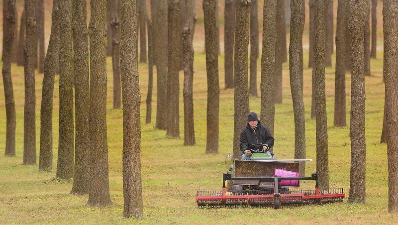 Money trees: Walnut trees paying off for Logansport family | Local