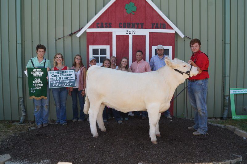 2019 4-H Fair Results: Beef Show