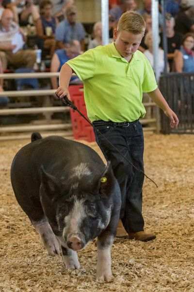 Autistic 4-H'er able to show animals at fair thanks to sponsor