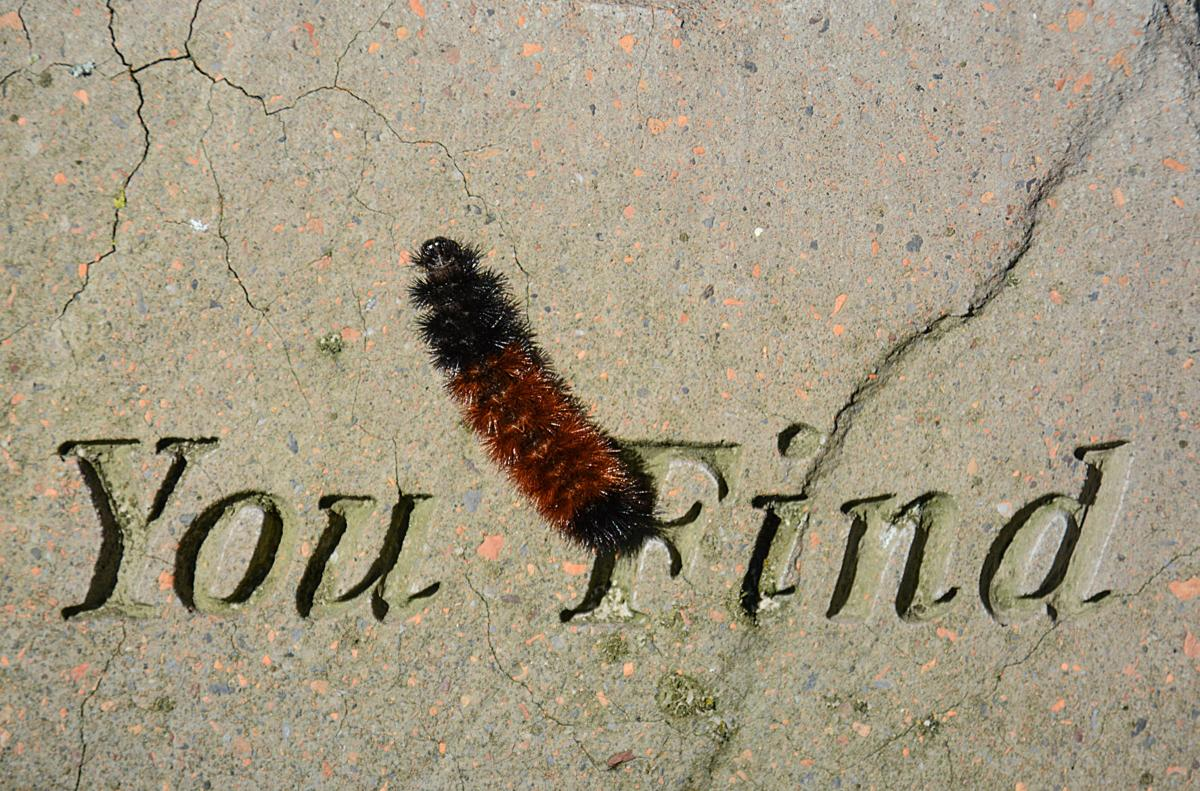 Woolly worms invade Walton property