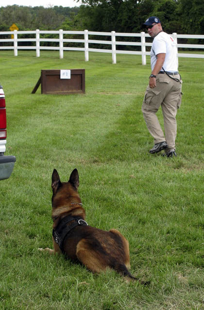 Police dogs compete