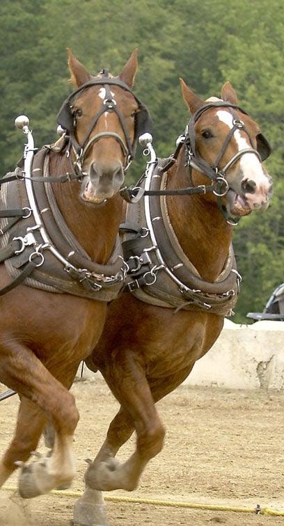 Horse Pull 1