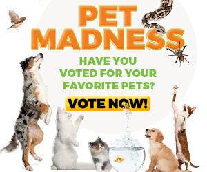 Pet Madness Contest