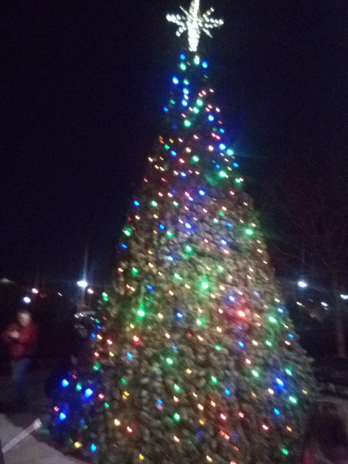Willow Grove tree