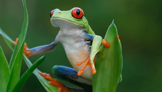 facts about frogs the learning key