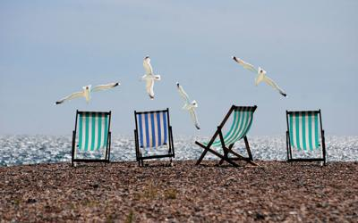 Study: Staring at seagulls could prevent them from snatching your food