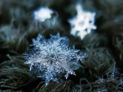 Did You Know? Facts about snowflakes | The Learning Key