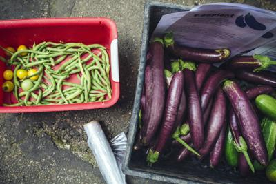 Urban-Farming Camps Have Kids Asking, Where's the Healthy Food?