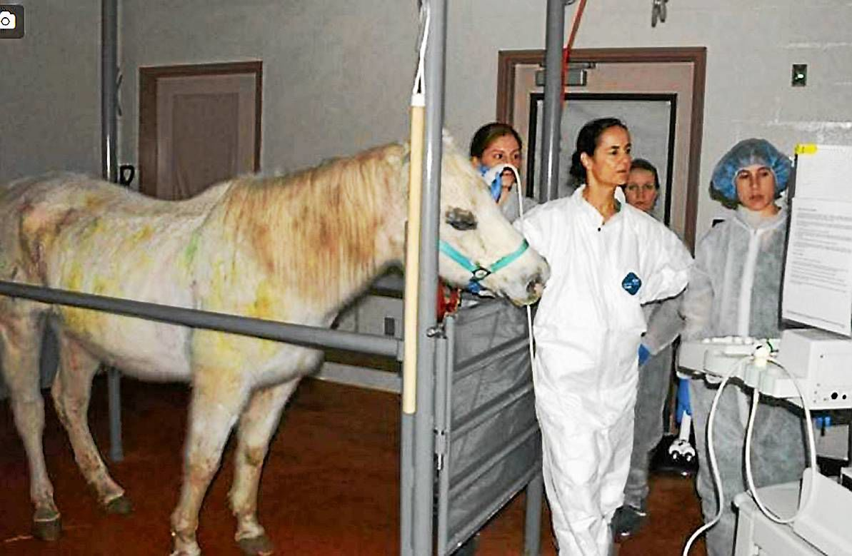 Lily the horse rescued after paint ball attack