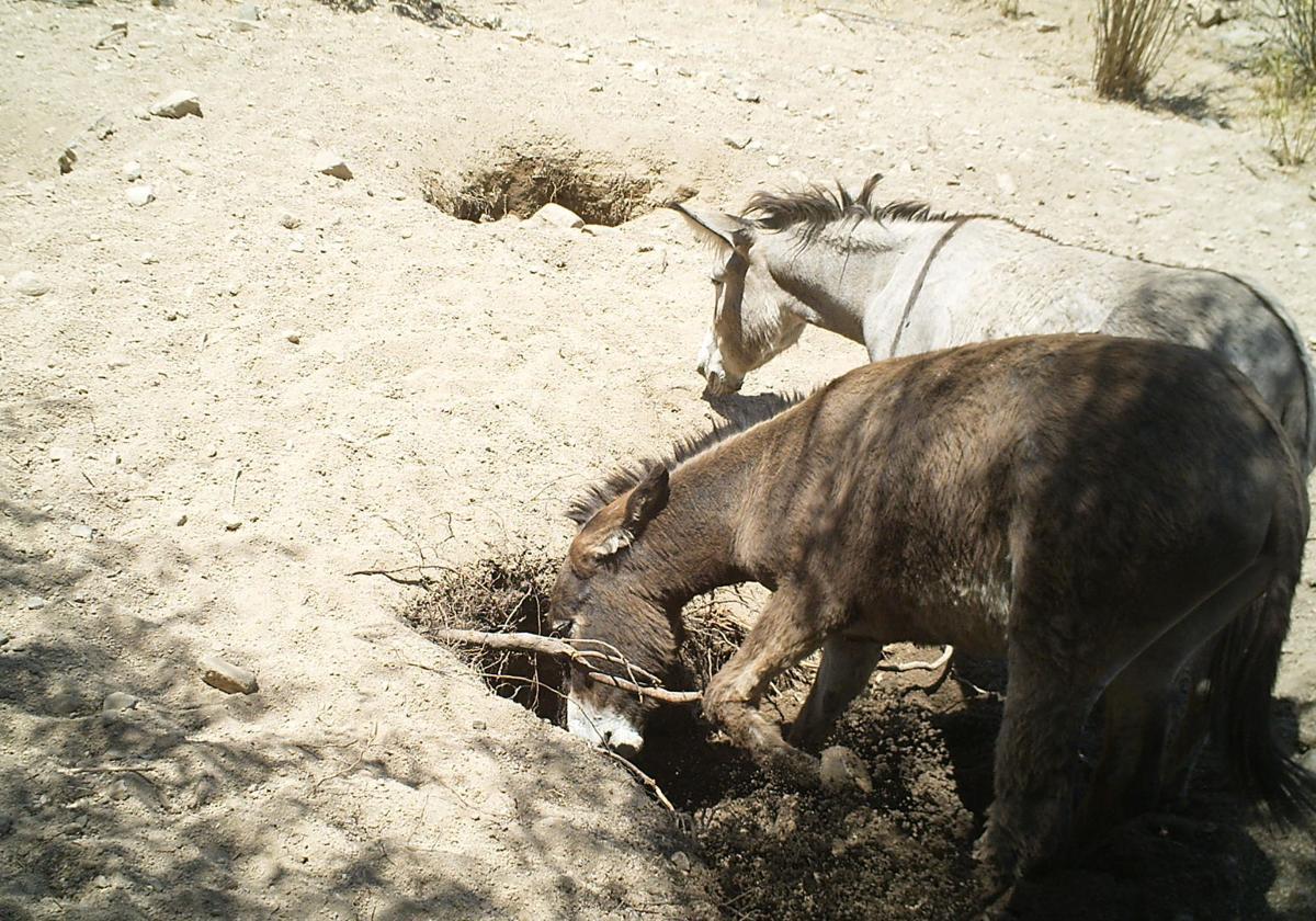 Digging Donkeys