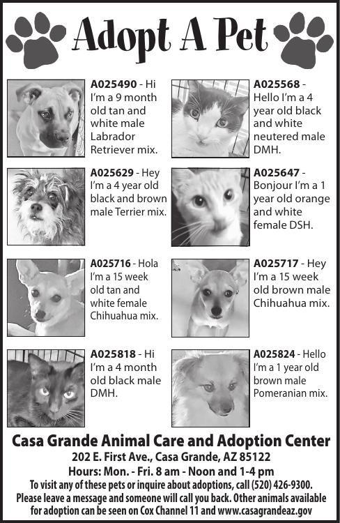 Casa Grande Animal Care and Adoption Center, 7/2/19