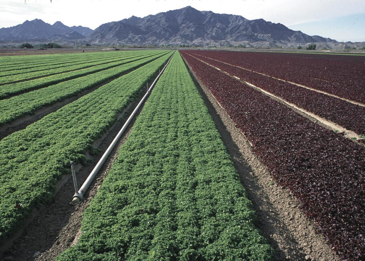 Arizona farms struggling to find legal workers | Farm And Ranch
