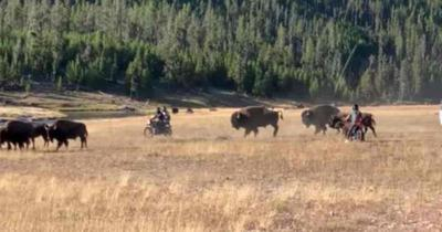 Motorcyclists in Yellowstone