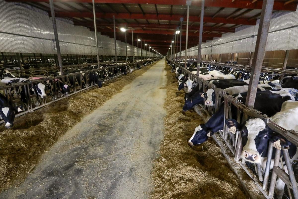 Dairy Farms Keeping Up