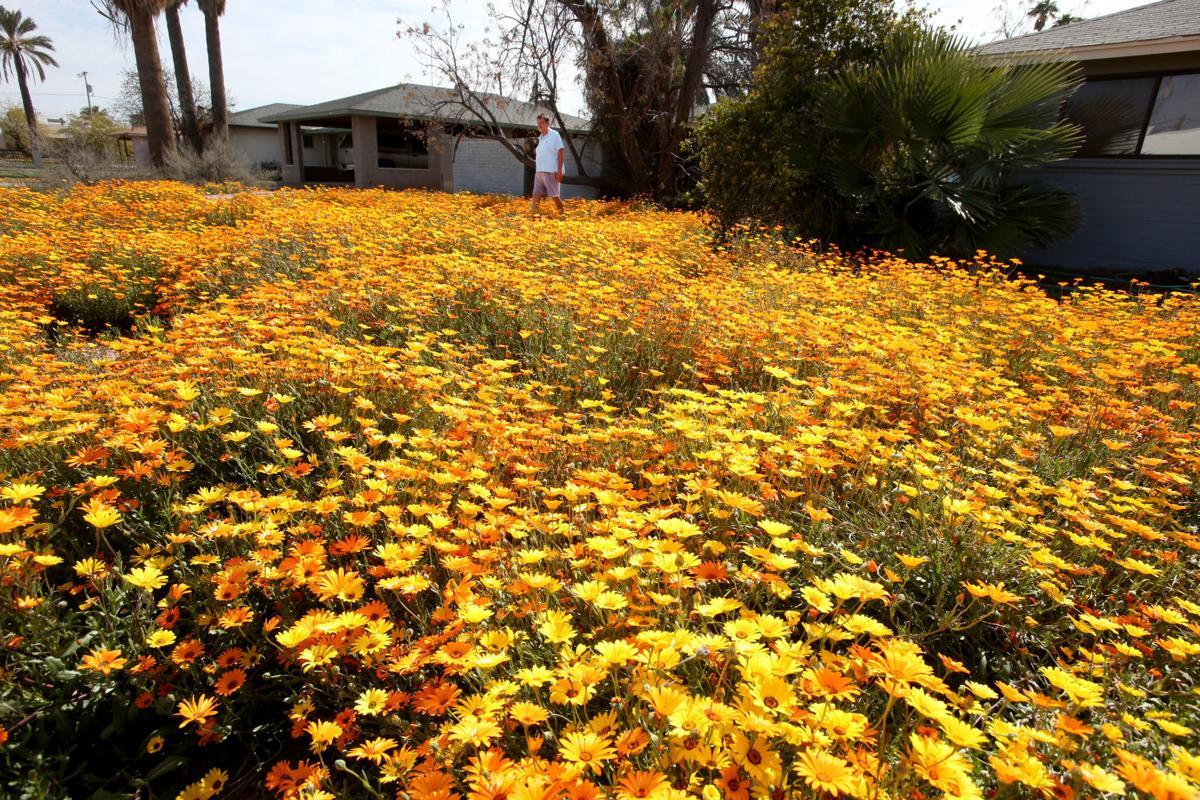 Wildflowers cover neighborhood