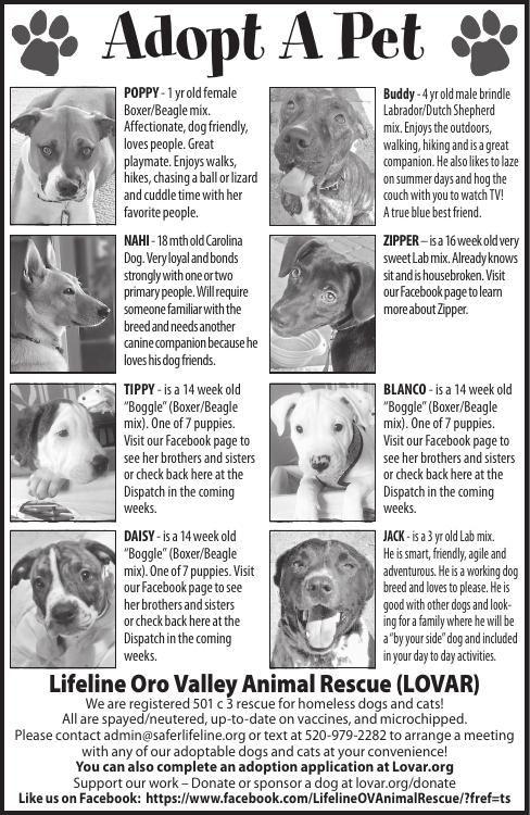 Lifeline Oro Valley Animal Rescue (LOVAR), 8/17/19