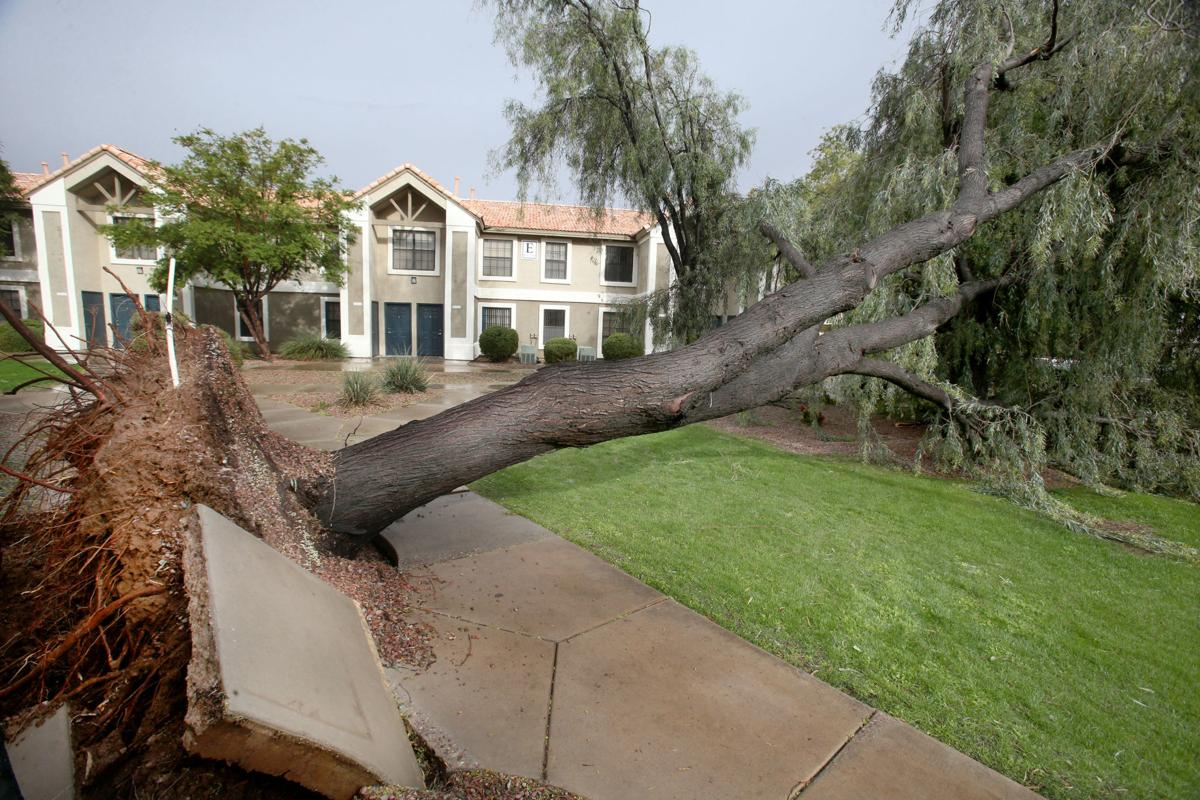 Down trees caused by storm