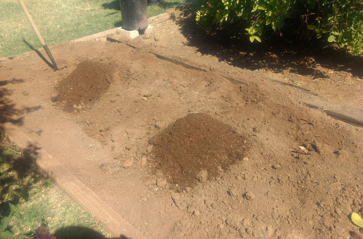 Gibson: The benefits of double-digging garden beds | Home And Hearth ...