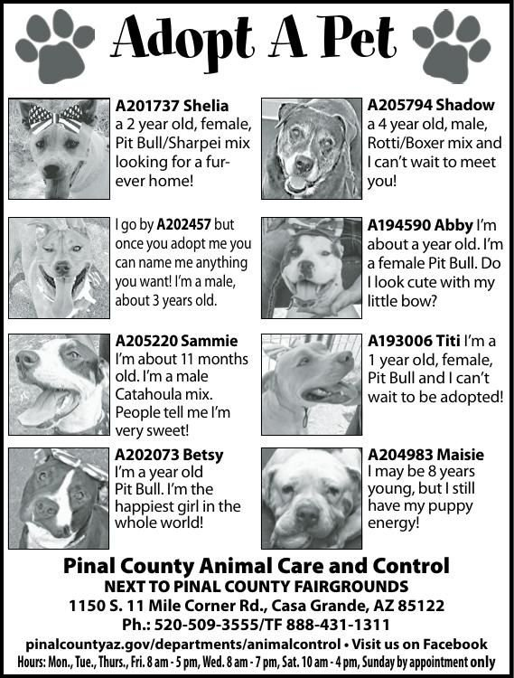Pinal County Animal Care and Control, 8/1/18 | Adopt A Pet