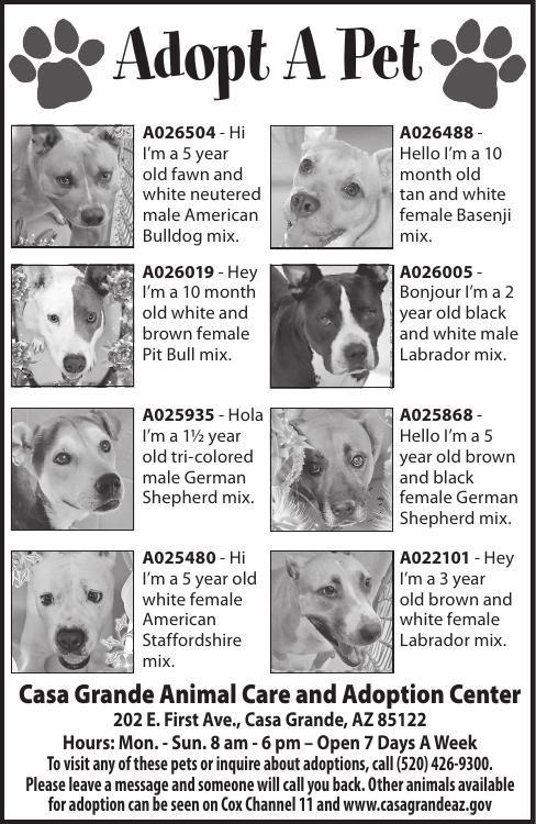 Casa Grande Animal Care and Adoption Center, 8/20/19