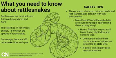 Rattlesnake Graphic