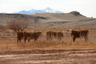 Dry Ranches