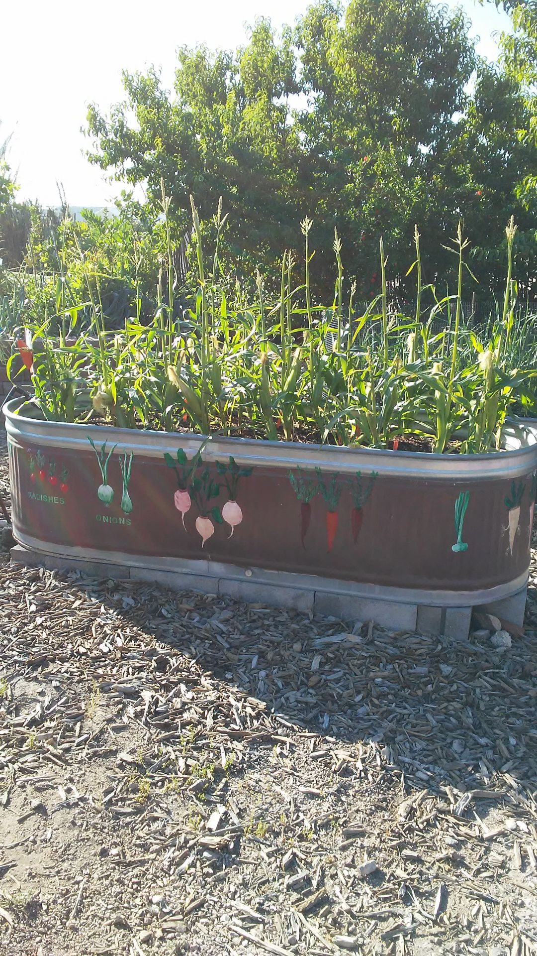Gibson Stock Tank Raised Bed Gardens Trivalley Dispatch Pinalcentral Com