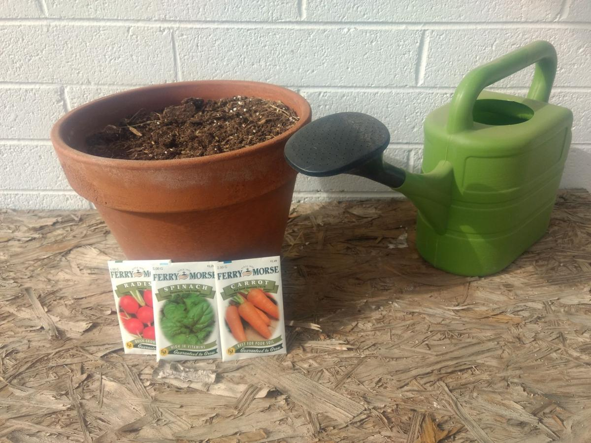 Gibson: Growing vegetables in containers adds to healthy plate ...