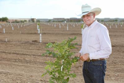 Pecan tree farmer Compton