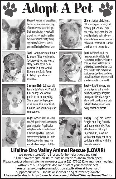 Lifeline Oro Valley Animal Rescue (LOVAR), 7/6/19