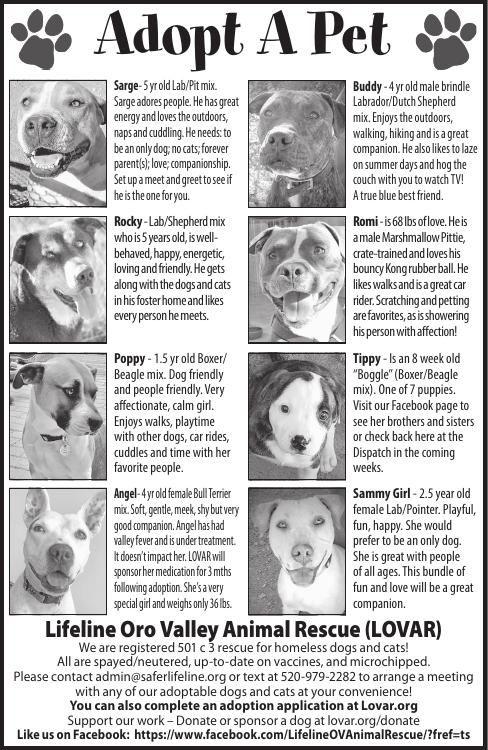 Lifeline Oro Valley Animal Rescue (LOVAR), 7/27/19
