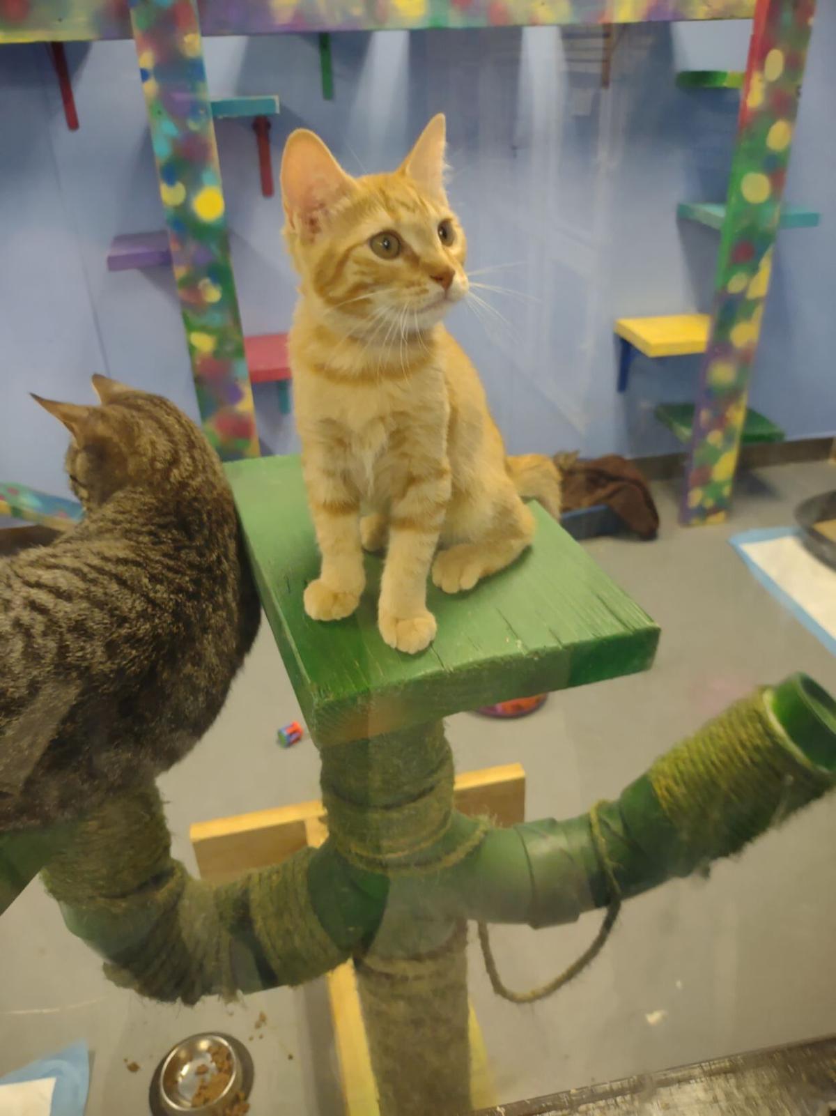 Pinal County Animal Control Center