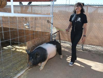 FFA raising pigs