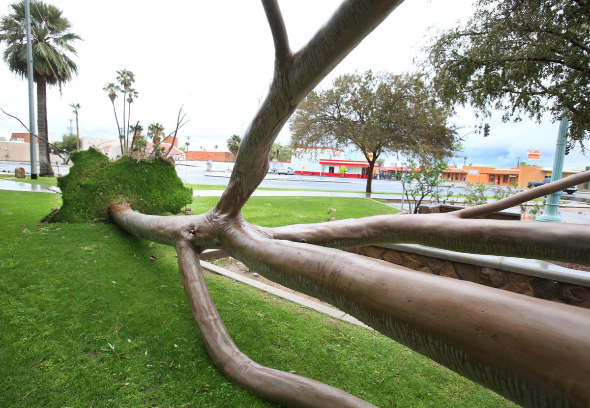 Down trees cuased by storm
