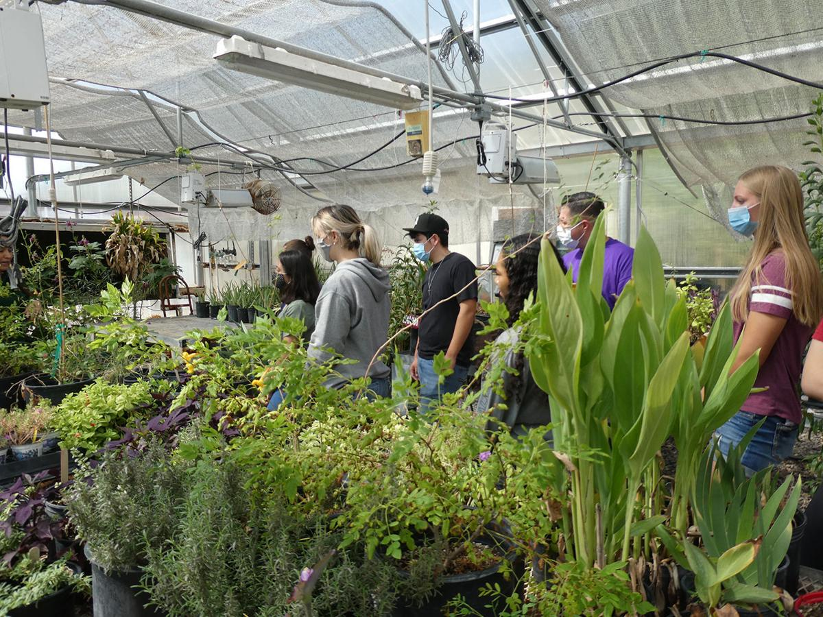 CAC Greenhouse