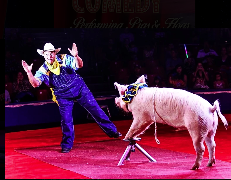 Pork Chop Revue