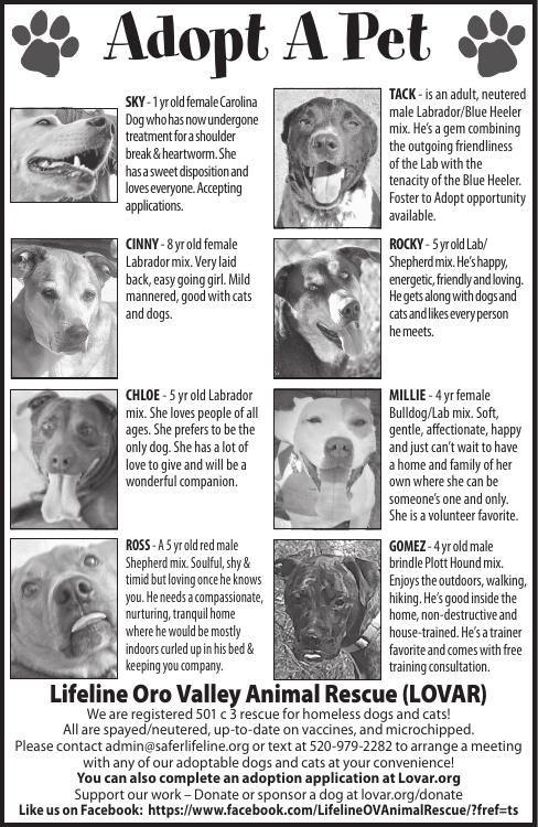 Lifeline Oro Valley Animal Rescue (LOVAR), 10/5/19